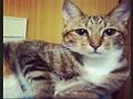 寵物遺失,請協助找尋我的寶貝---米克斯 mix