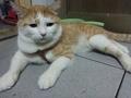 寵物遺失,請協助找尋我的寶貝---米納斯